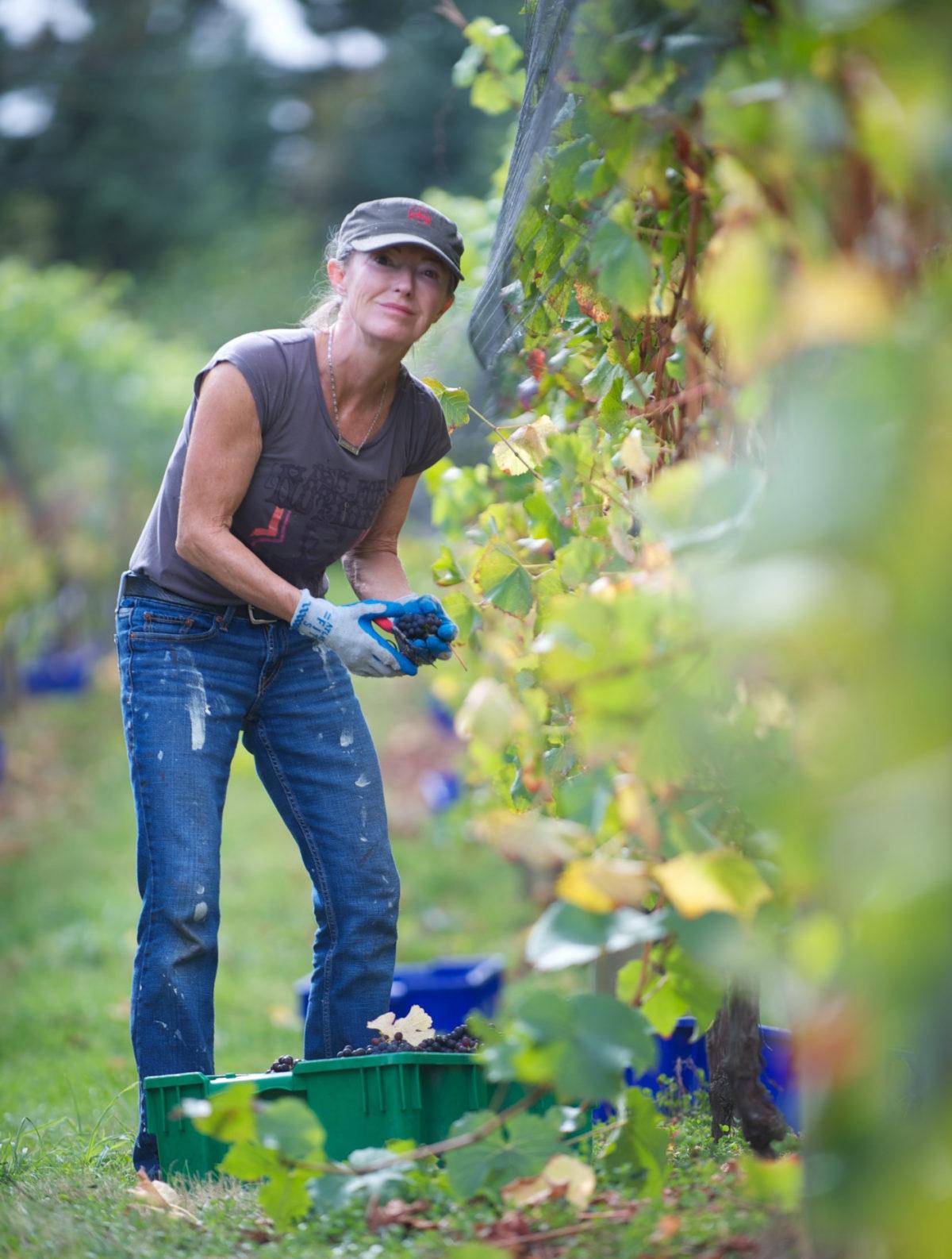 40 Knots Winery Worker